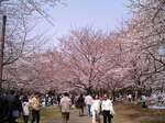 花見_20060401